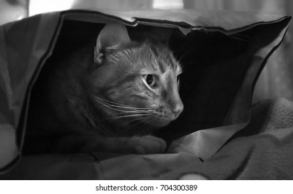 Cat hiding in a paper grocery bag in black and white/Cat in a bag