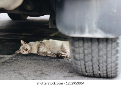 The cat was hit by a car in the middle of the street.
