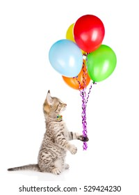 Cat holding balloons and looking up. isolated on white background