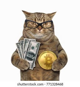 The cat is holding a bitcoin in one paw and dollars in other. White background.