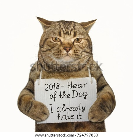 36b5adc480f Cat Holding Funny Banner White Background Stock Photo (Edit Now ...
