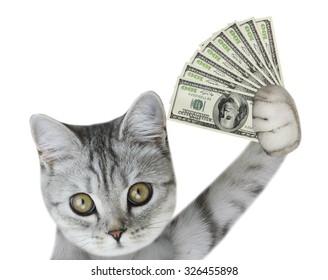 cat holding money