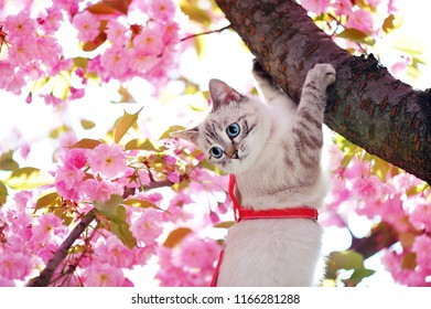 Image result for cat holding flowers