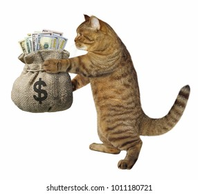 The cat is holding a sack of money. White background.
