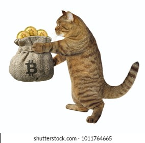 The cat holds a big bag of bitcoins. White background.