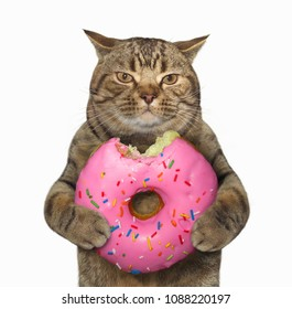 The cat holds a big pink bitten donut. White background.