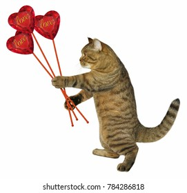 The cat  holds a bouquet of ruby hearts. White background.