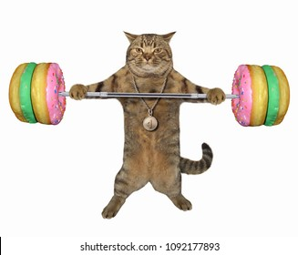 The cat holds a donut barbell. White background.