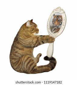 The cat holds a mirror and looks at his unusual reflection. White background.