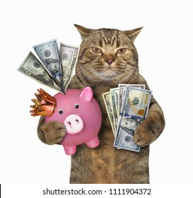 The cat holds a pink piggy bank filled with American dollars. White background.