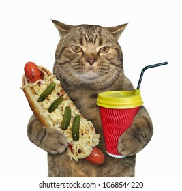 The cat holds a red cup of latte and a hot dog. White background.