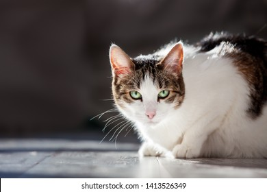 Cat at home. Pet with green eyes