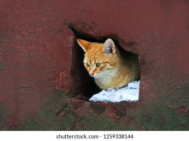 Cat. A homeless cat looks out of the hole of the house leading to the basement.