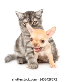 Cat hugging chihuahua puppy. Isolated on white background