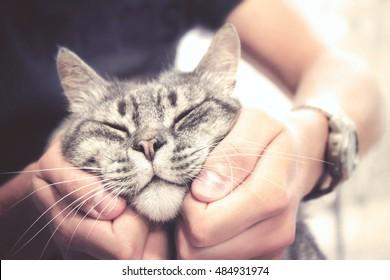 cat in human hands, pleased feline with vintage effect