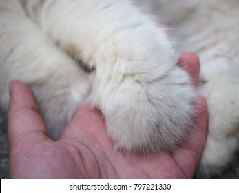cat and human are holding hands.
