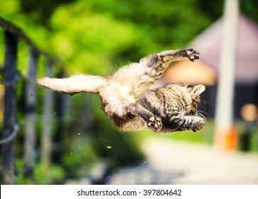 Cat hunted a sparrow in the air jump