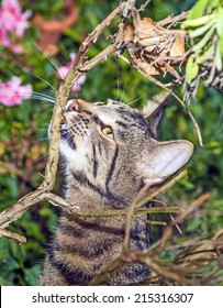cat is hunting in the garden