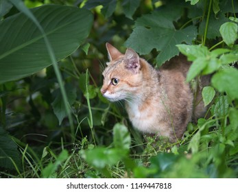 Cat hunting in nature