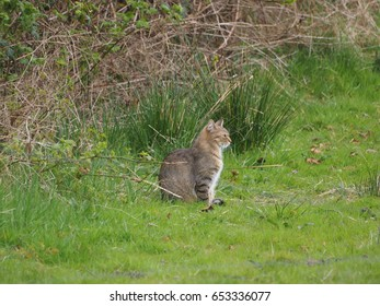 cat for hunting in the nature