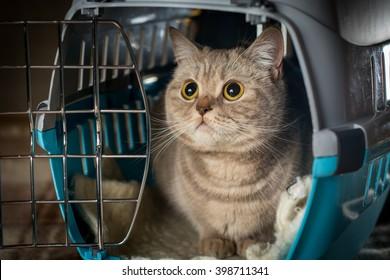 Cat inside pet carrier