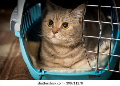Cat inside pet carrier. Closeup of cat face.
