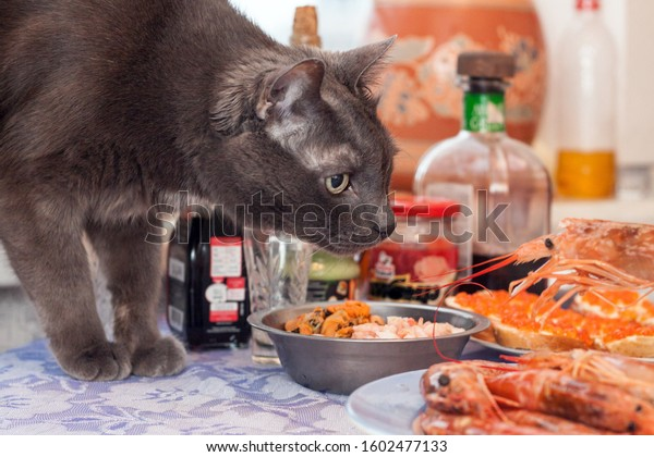 Cat is interested of fresh cooked langoustine.