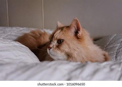 Cat is interesting something , cat