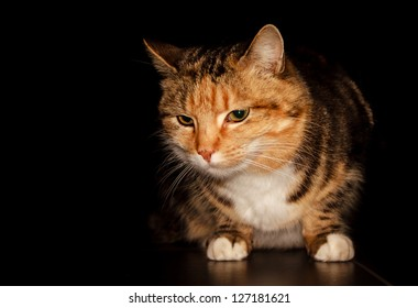 Cat isolated black