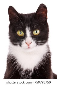 Cat is isolated on white. Striped cat sits. A picture for a calendar or a cat food.