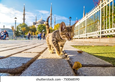 Cat  in Istanbul, Turkey in a beautiful summer day