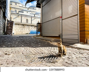 Cat in Istanbul, Turkey. Homeless Cute Cat. A street cat in Istanbul. Homeless animals theme. A stray cat on the street of Istanbul on a sunny day in the old part of the city near closed store mosque.
