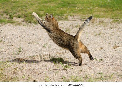 Cat jumping in the air and hunting flies