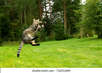 Cat jumping and playing on grass meadow
