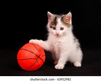 cat keeps a basketball ball