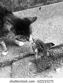 Cat kissing
