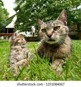 cat and kitten in the garden in grass
