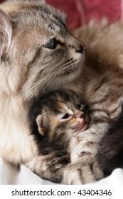 Cat and kitten hugs