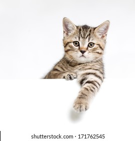 Cat or kitten isolated behind white signboard