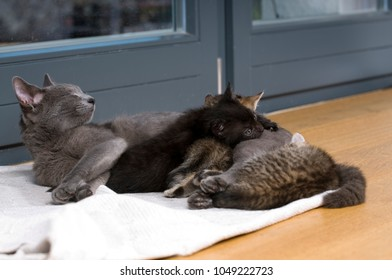 Cat with kitten lying in a room