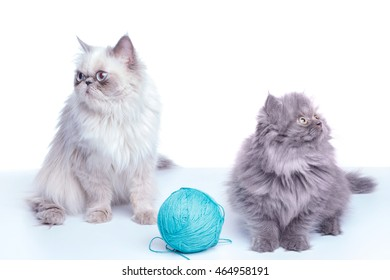 Cat and kitten  on white background