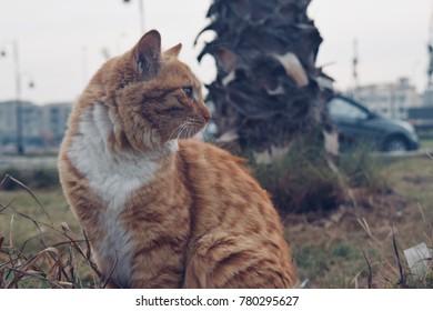 Cat kitten posing for a photo in garden