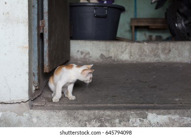 cat or kitten sitting and looking on side at street wall