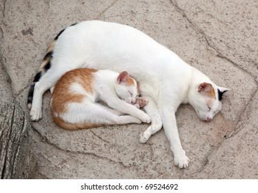 Cat and kitten it is sweet sleep