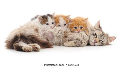 Cat with kittens isolated on a white background.