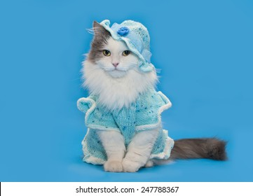 cat in knitted clothes on a blue background isolated