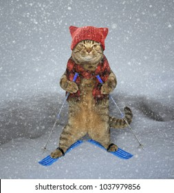 The cat in a knitted hat and a scarf is skiing.