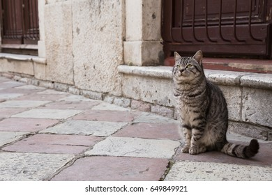 Cat in Kotor, Old Town