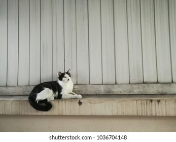 A cat lay down on the wall