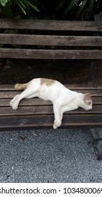 Cat laying down on public bench